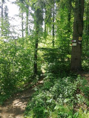 Schwarzwald | Hausacher Bergsteig | Hinein in das grüne Vergnügen