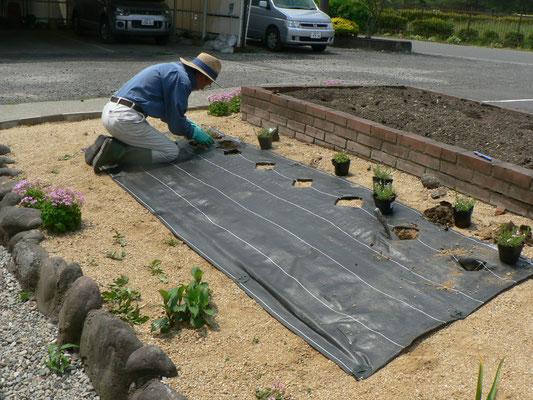 芝桜植付作業
