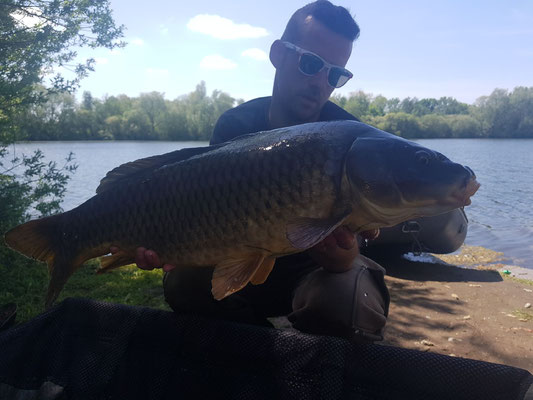 Carpe Commune P4, 6kg le 11 mai, étang Acrocarpe - 80120 Rue- Flandre