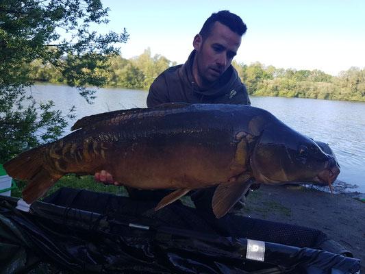 Carpe Miroir linéaire de 12 kg, poste 4 le 11 mai, étang Acrocarpe - 80120 Rue- Flandre