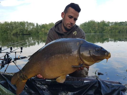 Carpe miroir, 12 kg, poste 4 le 12 mai, étang Acrocarpe - 80120 Rue- Flandre