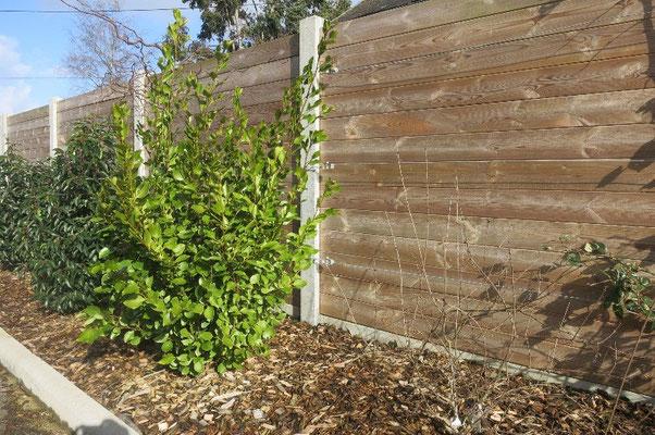 clôture Palissade bois avec poteaux béton 35140 Saint-Aubin-du-Cormier