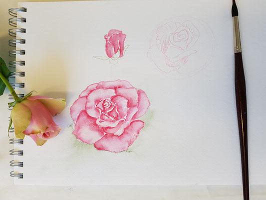 Rosen malen lernen