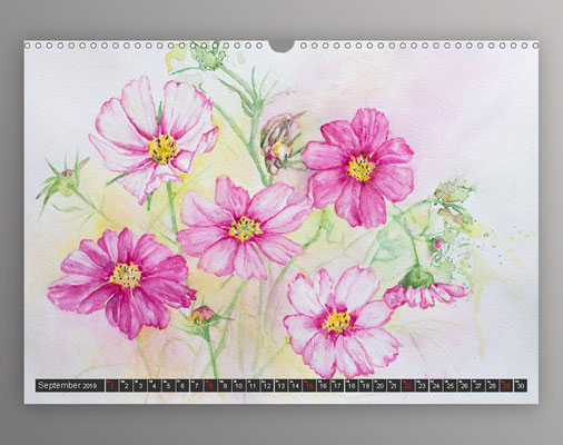 Cosmea in Aquarell