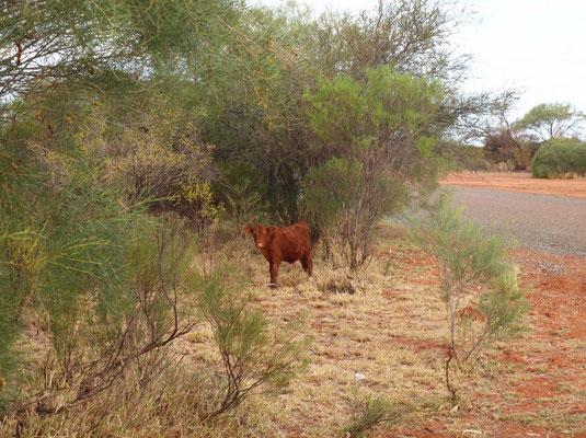 ein kleiner Besucher am Rastplatz, irgendwo im Outback