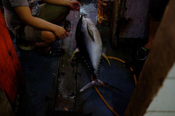 Thunfisch. Das Kilo kostet in Sandakan auf dem Fischmarkt ca. 4 Euro