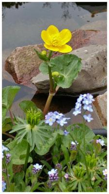 Bloemen aan de vijver