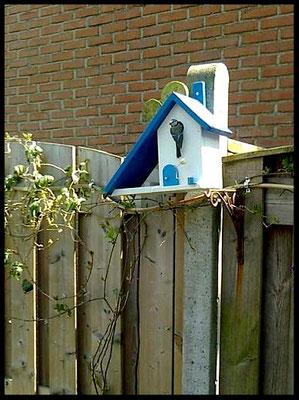 Houten Nestkastje voor Pindakaas pot, Nestkastje, Huisje bezet, Vogelhuisje bouwen, vogelhuisje pindakaas pot_4