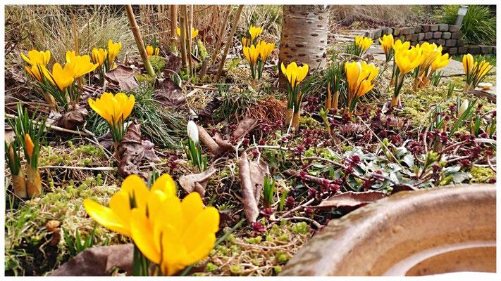 Krokussen: het ultieme lente gevoel !!