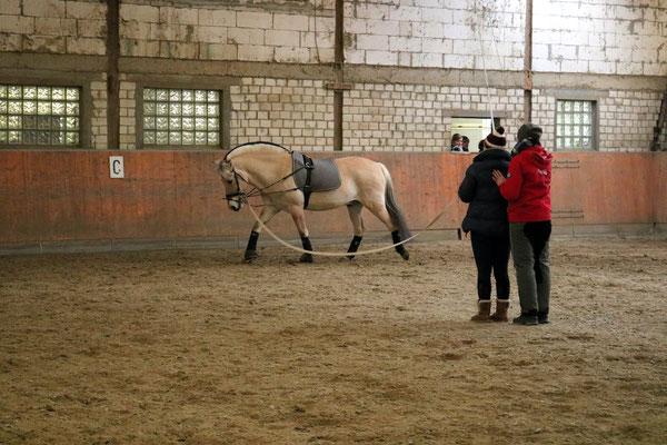 ... und dann auch endlich mit Pferd
