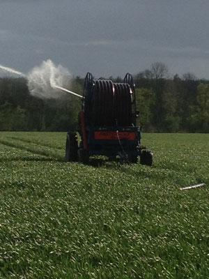 Beregnung ist ein wichtiger Schlüssel für stabile Ernten - hier wird Weizen beregnet
