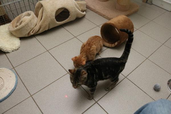 Die Kitten tobten mit den Laserpointer