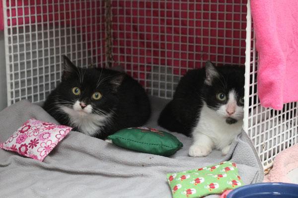 Und in der Quarantäne waren die Katzen begeistert von den Katzenkissen