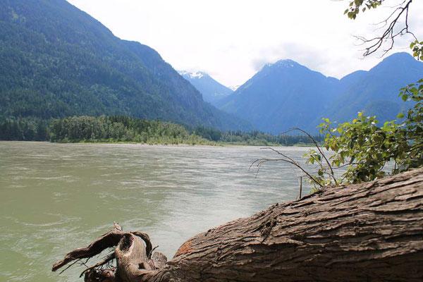 der mächtige Fraser River / mighty Fraser River