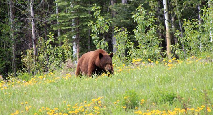 ein brauner Bär / a brown bear for a change