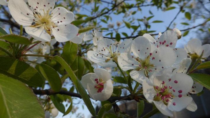 der Frühling hält Einzug am Orta-See