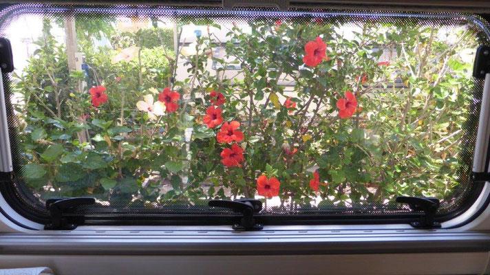 unser Blick vom Küchenfenster