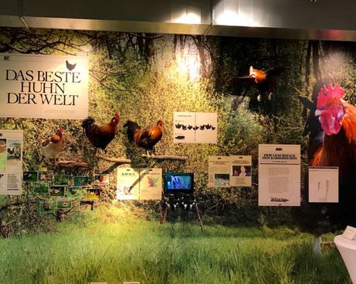 Ich wollt ich wär ein Huhn - das Genussregal informiert kreativ, wie naturnah in der Südsteiermark produziert wird.