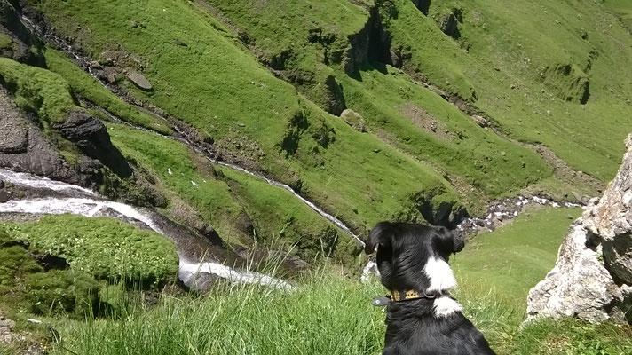 Bläss oberhalb Wasserfall