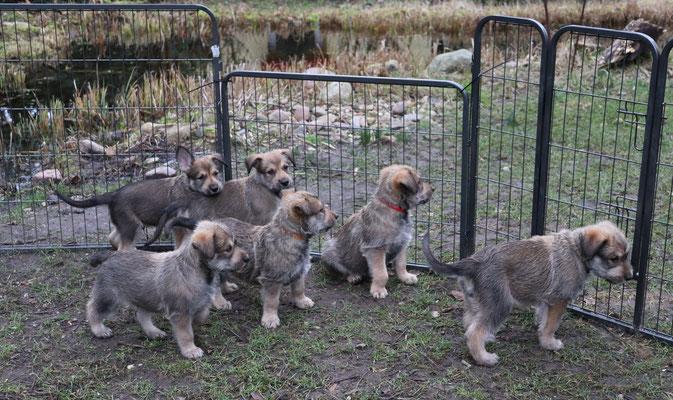 Mama springt immer einfach über den Zaun - und wir?