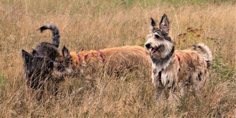 Rosa (A-Wurf), Betty und Holly beim Spiel
