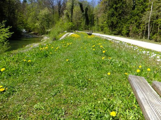 Wanderweg von Anger Richtung Gasthaus Waldfriede