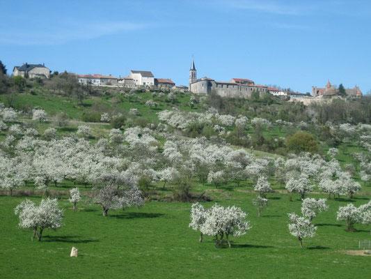 Mirabelliers en fleurs et Hattonchâtel