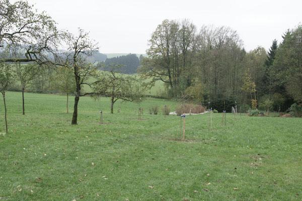 Unsere im Herbst 2014 angelegte Streuobstwiese.