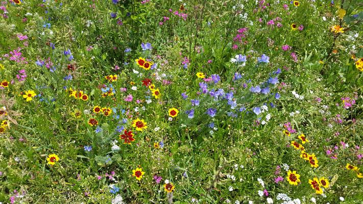 Blumenstreifen mit Hecke