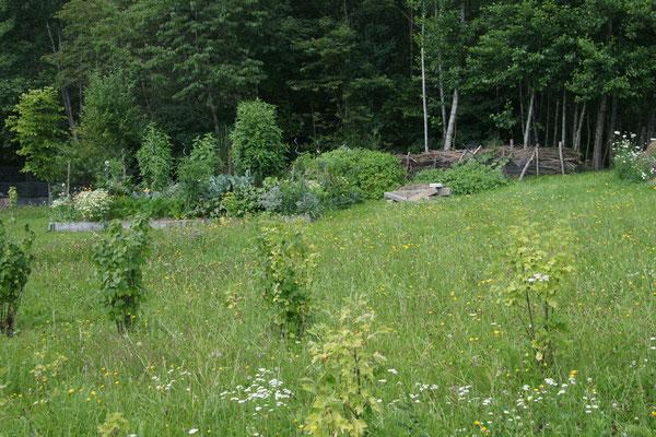 Unsere Hügelbeete fügen sich sehr gut in die Natur mit ein.