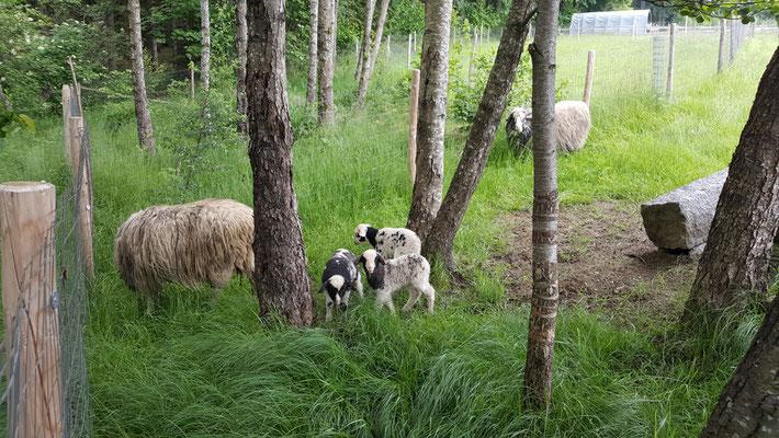 Unser Natürlicher Rasenmäher