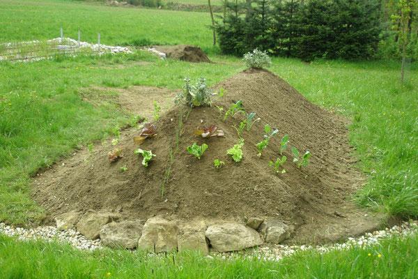 Die ersten Pflanzen......