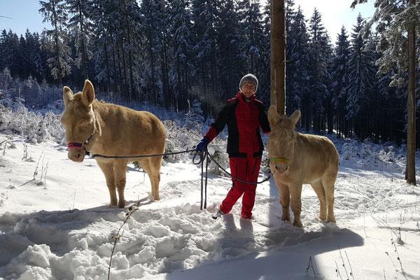 Eselwandern im Winter einfach Super