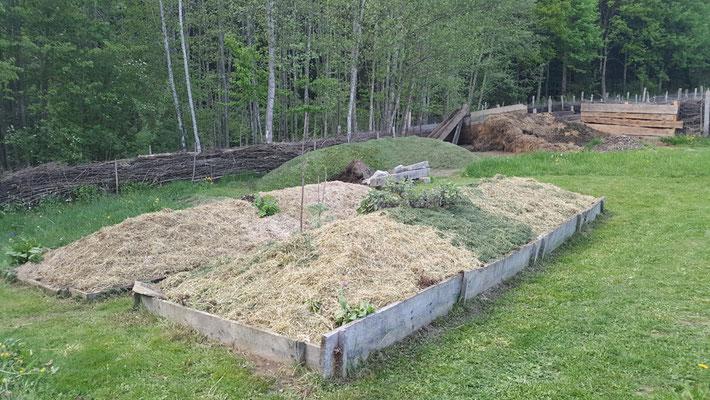 Im vordergrund die Hügelbeeten Gemulcht. Kompost vom letzten Jahr umgesetzt und mit Grasschnitt Gemulcht, da dürfen heuer Kürbis wachsen.
