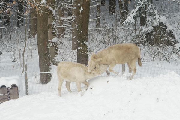 Spielen im Neuschnee