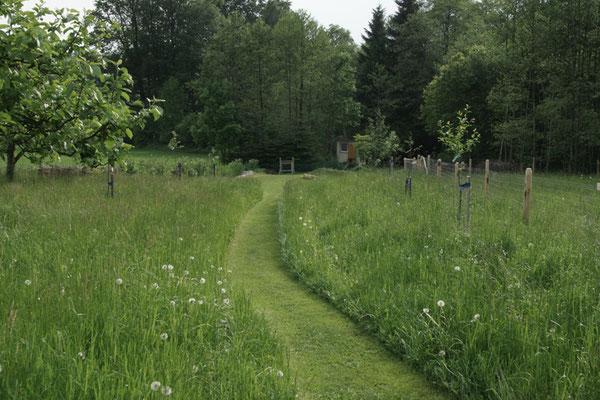 Der Weg im Grünen
