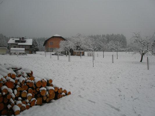 Unsere im Herbst 2014 angelegte Streuobstwiese, im Winter.