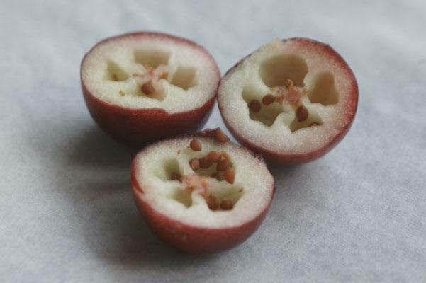 Cranberry aufgeschnitten