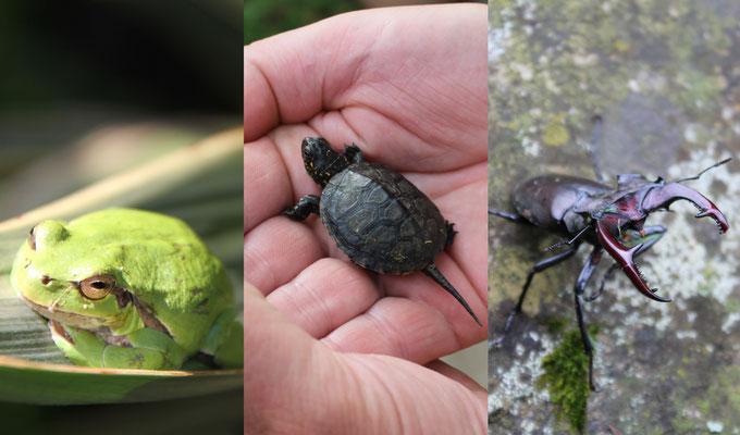 einzigartige Flora und Fauna