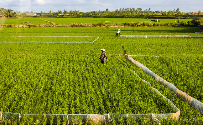 Vietnam # 03