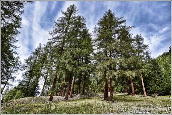 Forêt Mystique # 03
