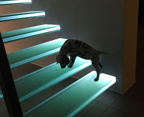 Offene, beleuchtete Glastreppe - die neugierige Frau Rot muss das gleich mal untersuchen