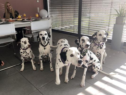 Familienfoto: Merle, Frau Sommer, Balou, Hella und Joschi