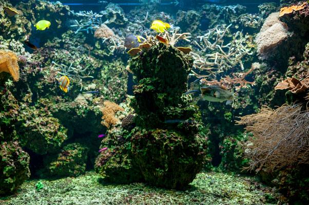 Künstlicher Korallenriff in einem Meerwasser-Aquarium