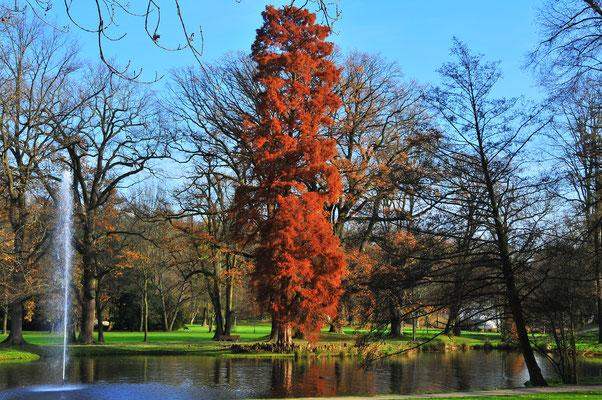 Baum mit roten Blättern im Park von Bad Homburg