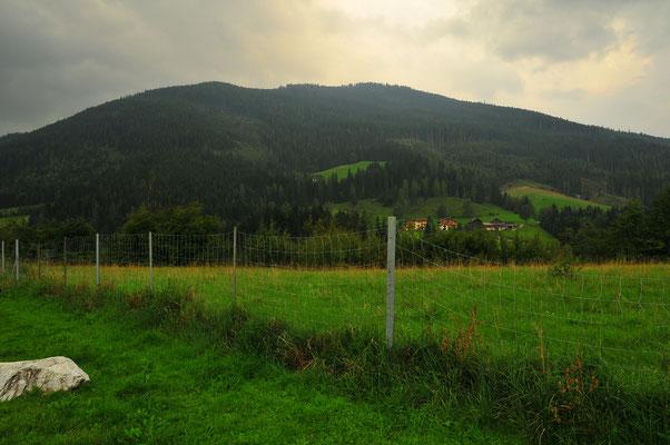 Weiden von Österreich