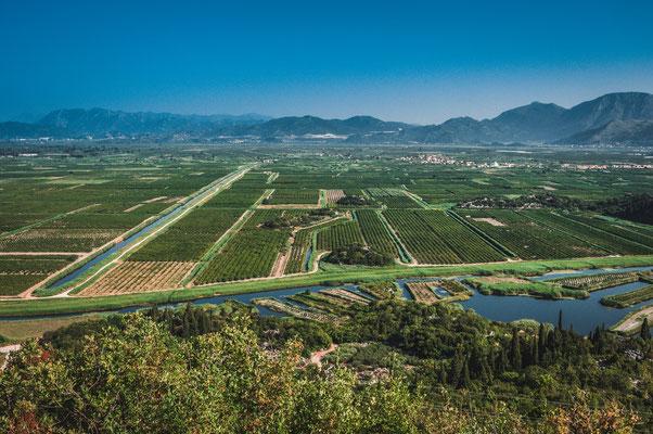 Unendliche kroatische Apfelsinenbaum Felder