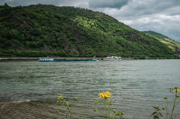 Der Rhein in voller Pracht