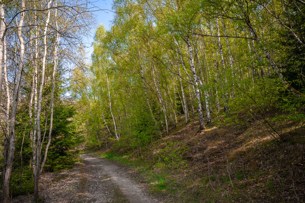 Spaziergang durch den Wald von Daaden