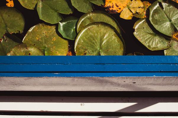 Wasserrosen vom Boot aus - Abstrakt